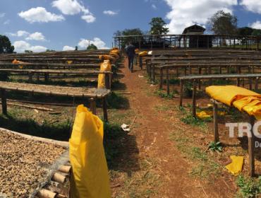 L'Ethiopie est à l'origine de l'expansion du café.